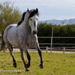 Summerwind_Marchador_horse_22