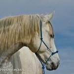 Summerwind_Marchador_horse_23