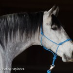 Summerwind_Marchador_horse_27