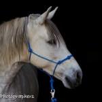 Summerwind_Marchador_horse_2_1