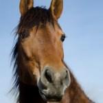 Summerwind_Marchador_horse_5
