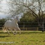 Summerwind_Marchador_horse_9