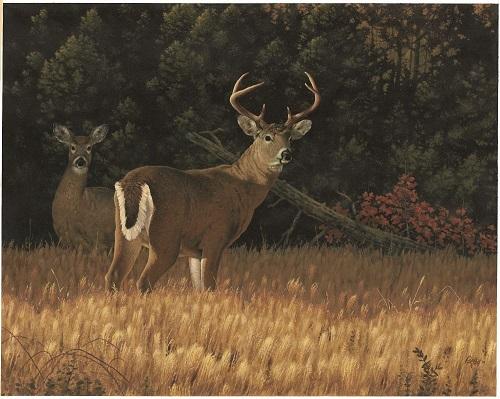 Free Wallpaper Fall Season Kentucky Department Of Fish Amp Wildlife Deer Hunting Basics