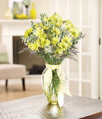 Fall In Love Again Wallpapers Yellow Daisy Delight At From You Flowers