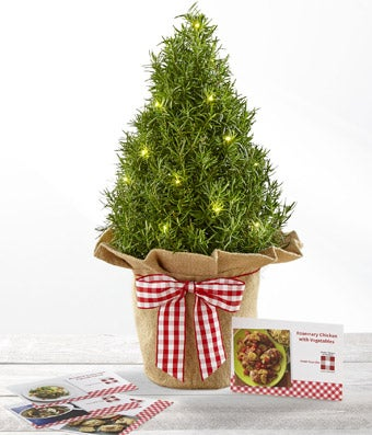 Mini Live Christmas Trees top live christmas trees by 19 small - small decorative christmas trees