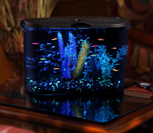 Aquarius 5 Rounded 5 Gallon Aquarium Kit : Fish Tank : Pet Supplies