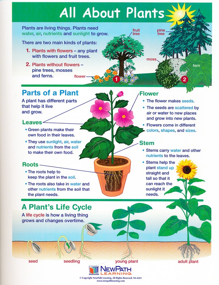 All About Plants Learning Center - Christianbook