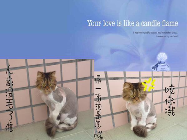 我的愛貓 @ 愛華如夢的部落格 :: 痞客邦
