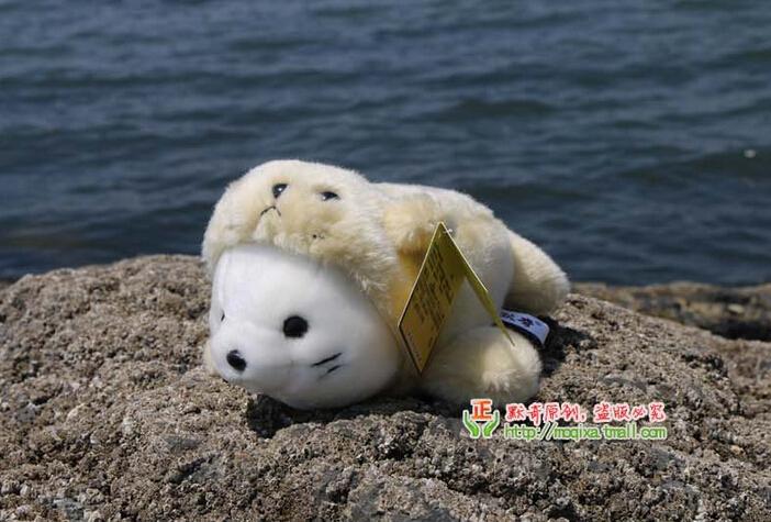 Cute Cubs Wallpaper Cute Baby Ocean Animals Www Pixshark Com Images