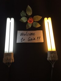 Online Buy Wholesale dimmable compact fluorescent from
