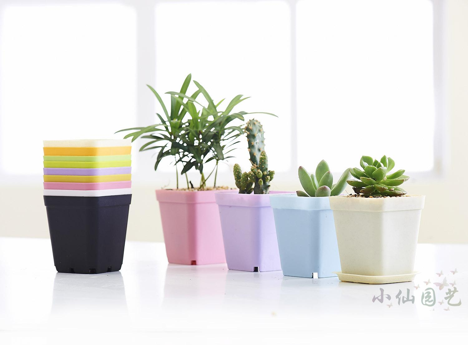 Mini Plant Pots Bulk Colorful Thick Fleshy Succulents Flower Pot Nursery Small