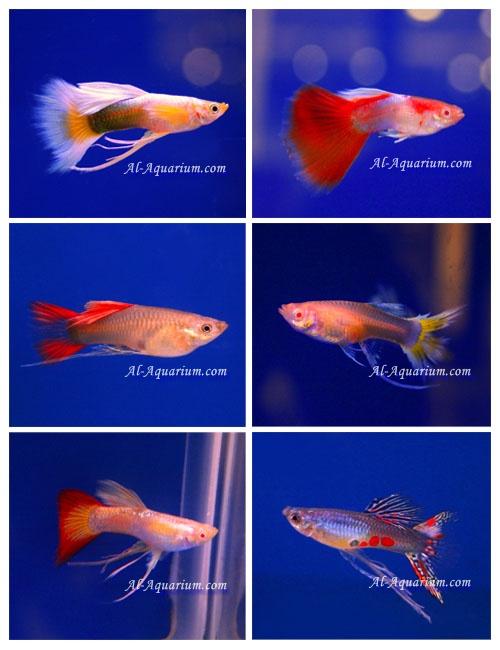 download game fish live apk mod