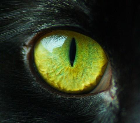 Black Cat Eyes Wallpaper Cat Eye A Fergy Galleries Digital Photography Review