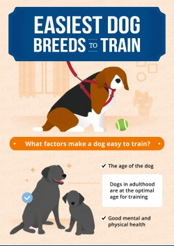Small Of Easiest Dog To Train