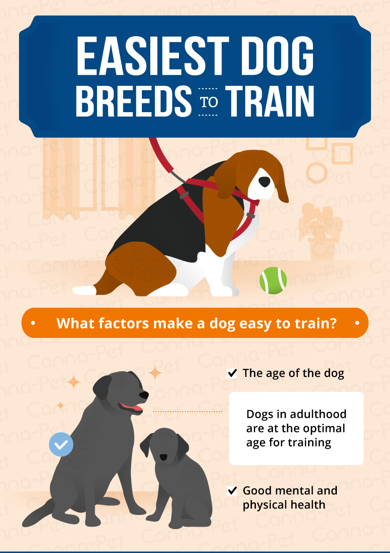 Large Of Easiest Dog To Train