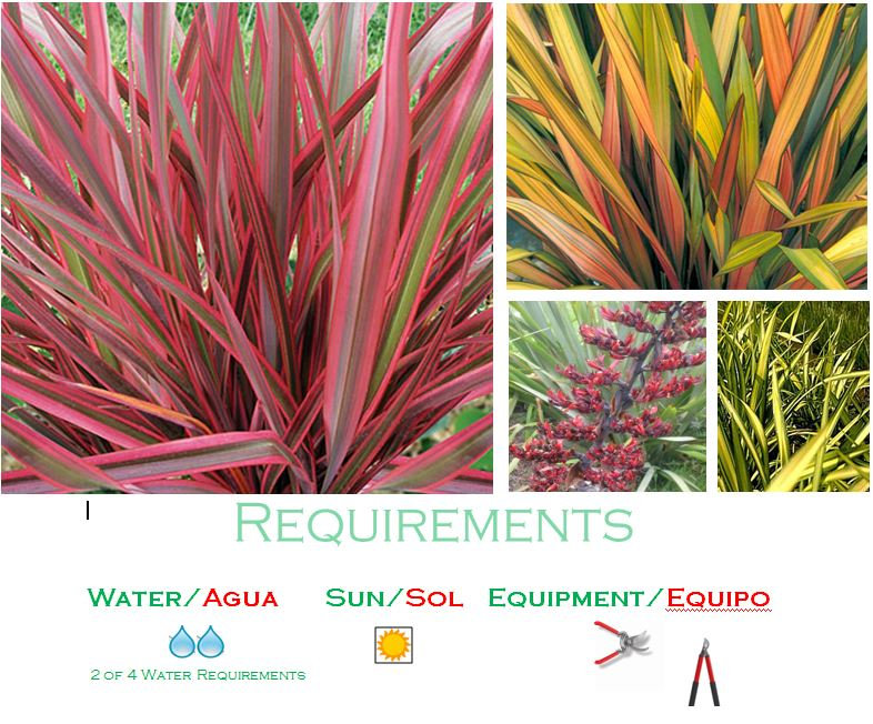 Flax New Zealand Flower Label New Zealand Flax/phormium Low Water Usage Plants For