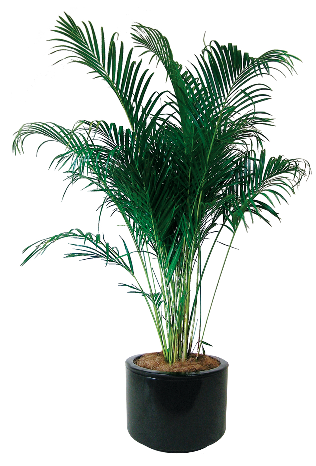 Floor Plants Indoor Indoor Plants Floor Plants Gaddys Indoor Plant Hire