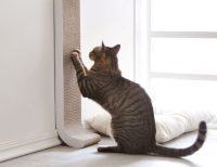 4CLAWS Wall Mount Cat Scratching Post  Gadget Flow