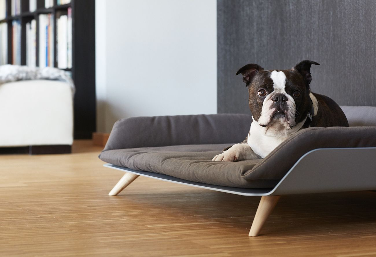 Modern Cat Bed Furniture Letto Daybed Modern Dog Bed Gadget Flow