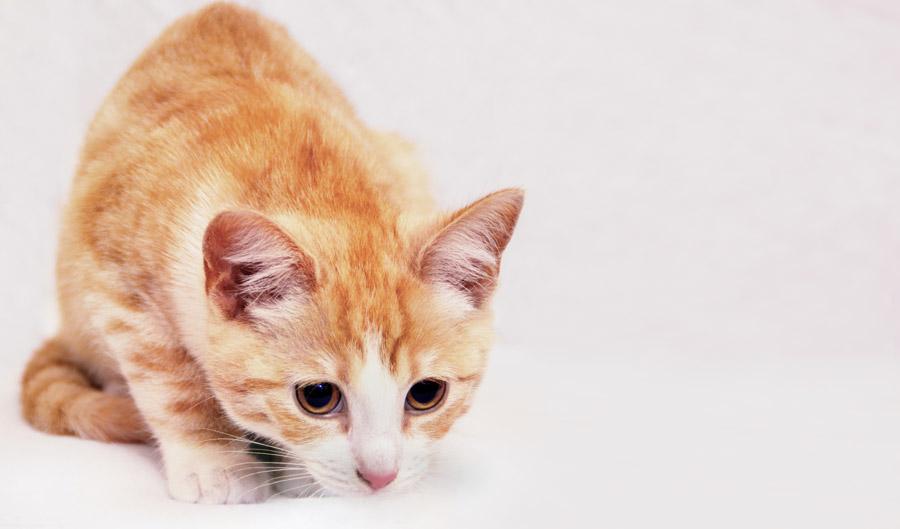 Cute Background Wallpaper Hd フリー写真 目を大きくして何かを狙っている猫でアハ体験 Gahag 著作権フリー写真・イラスト素材集