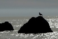 Seagull in silhouette.