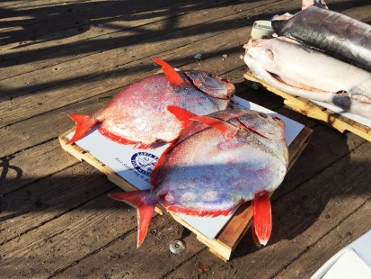 Two beautiful Opah (or Moonfish)