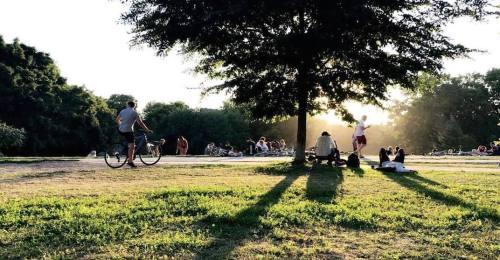 Trinity Bellwoods park as sun sets. Underneath a large tree, people are drinking.