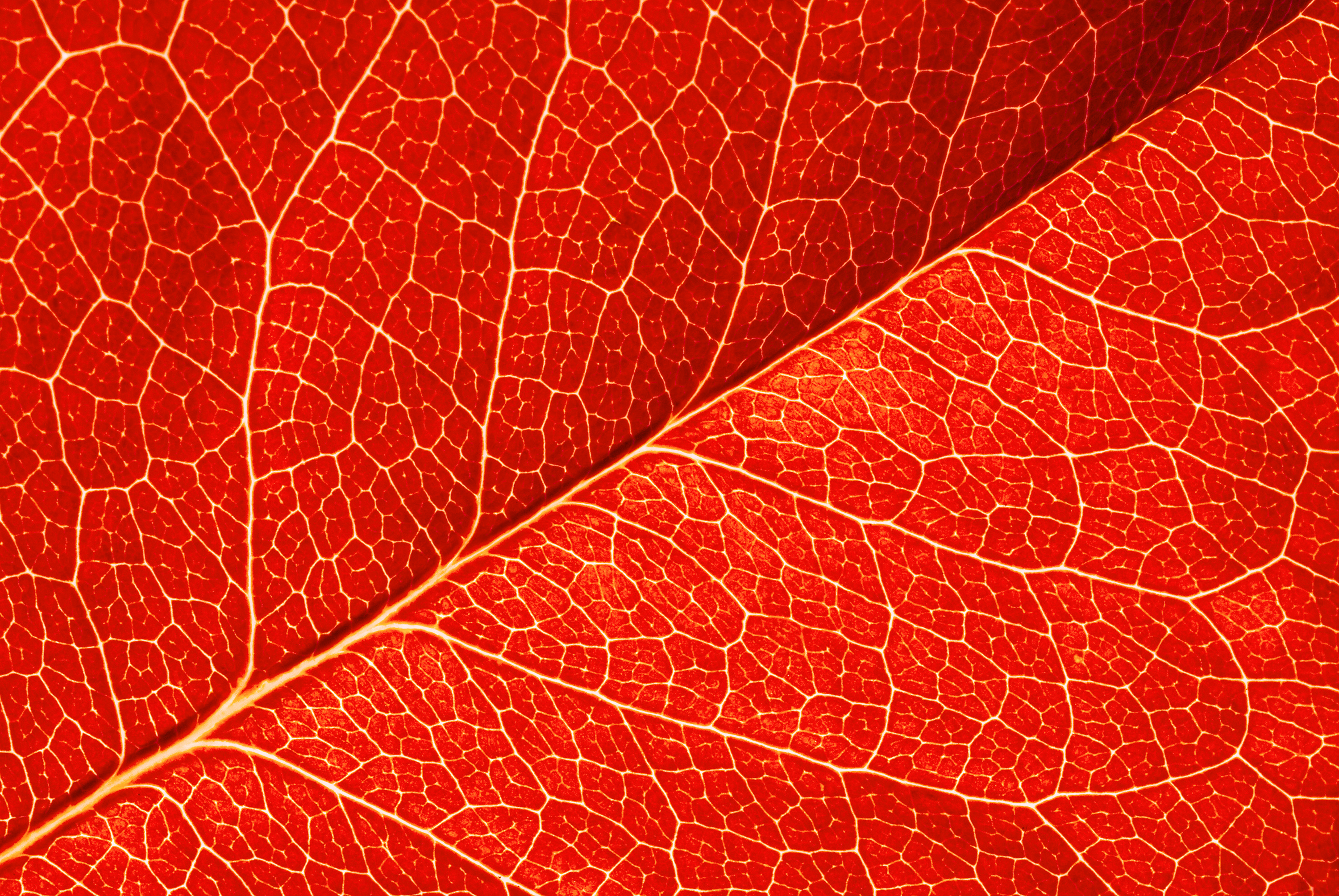 Fall Leaves Clip Art Wallpaper Red Leaf Texture Background Gallery Yopriceville High