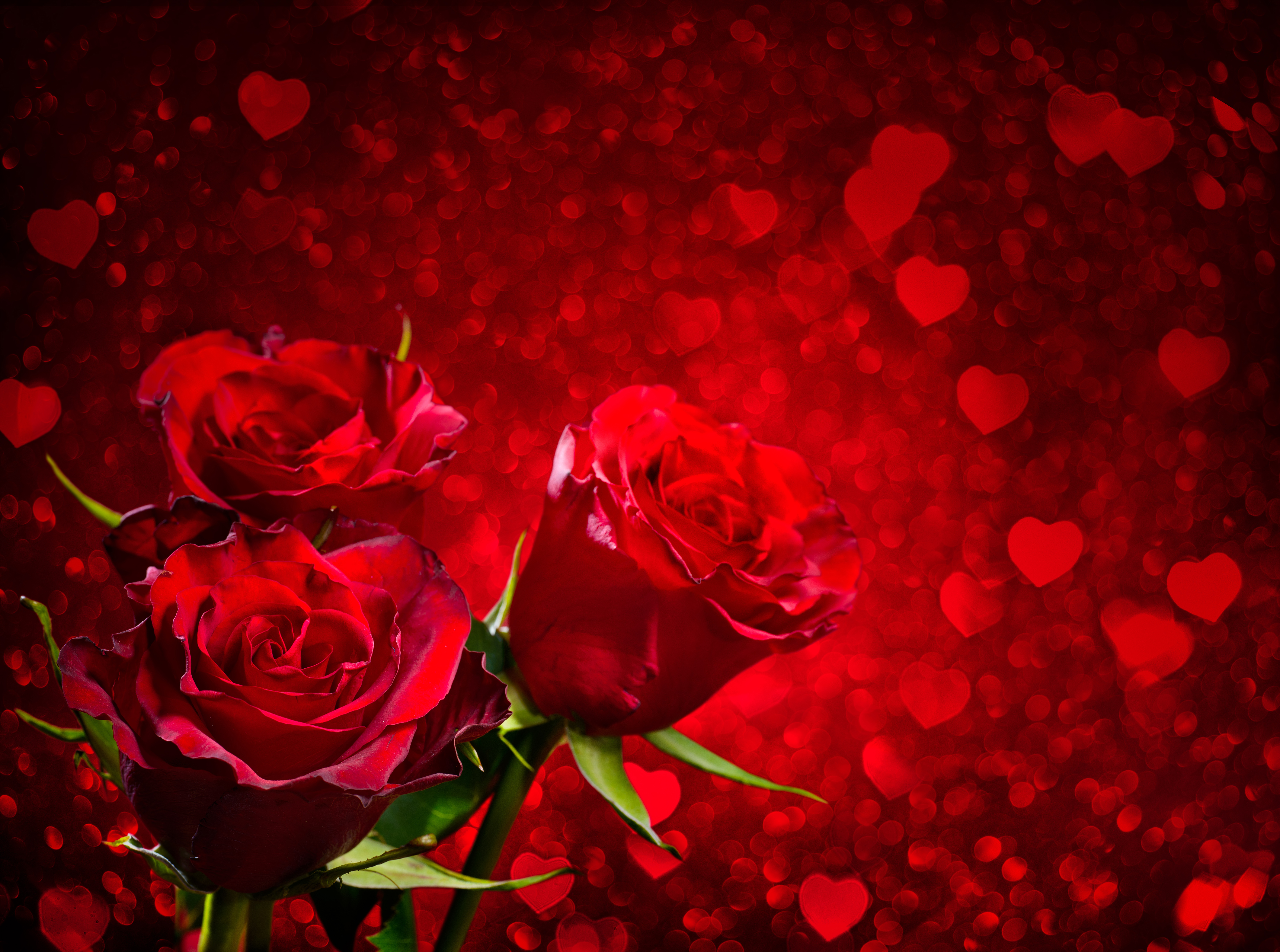 Rose Petals Falling Wallpaper Transparent Gif Red Roses And Hearts Background Gallery Yopriceville