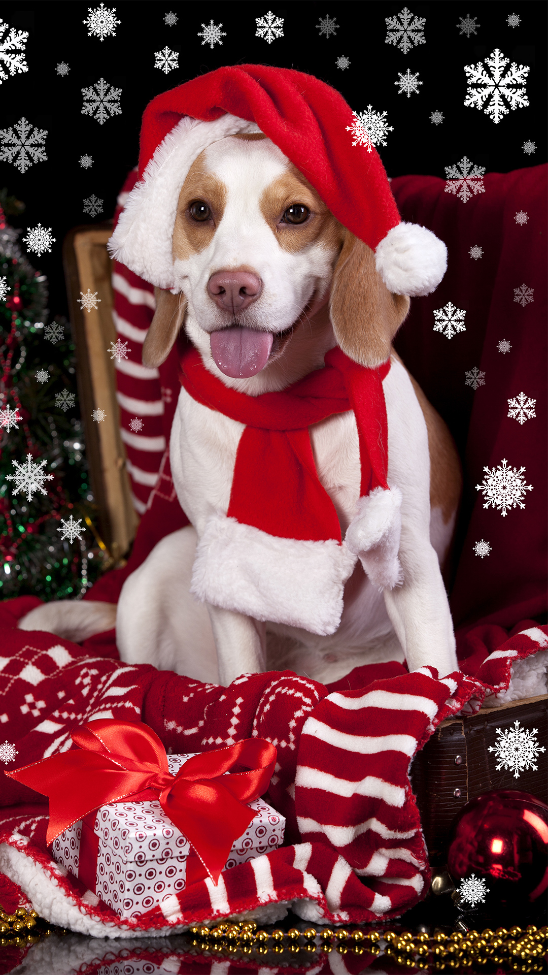 Free Fall Wallpaper For Iphone 6 Christmas Dog With Santa Hat Iphone 6s Plus Wallpaper