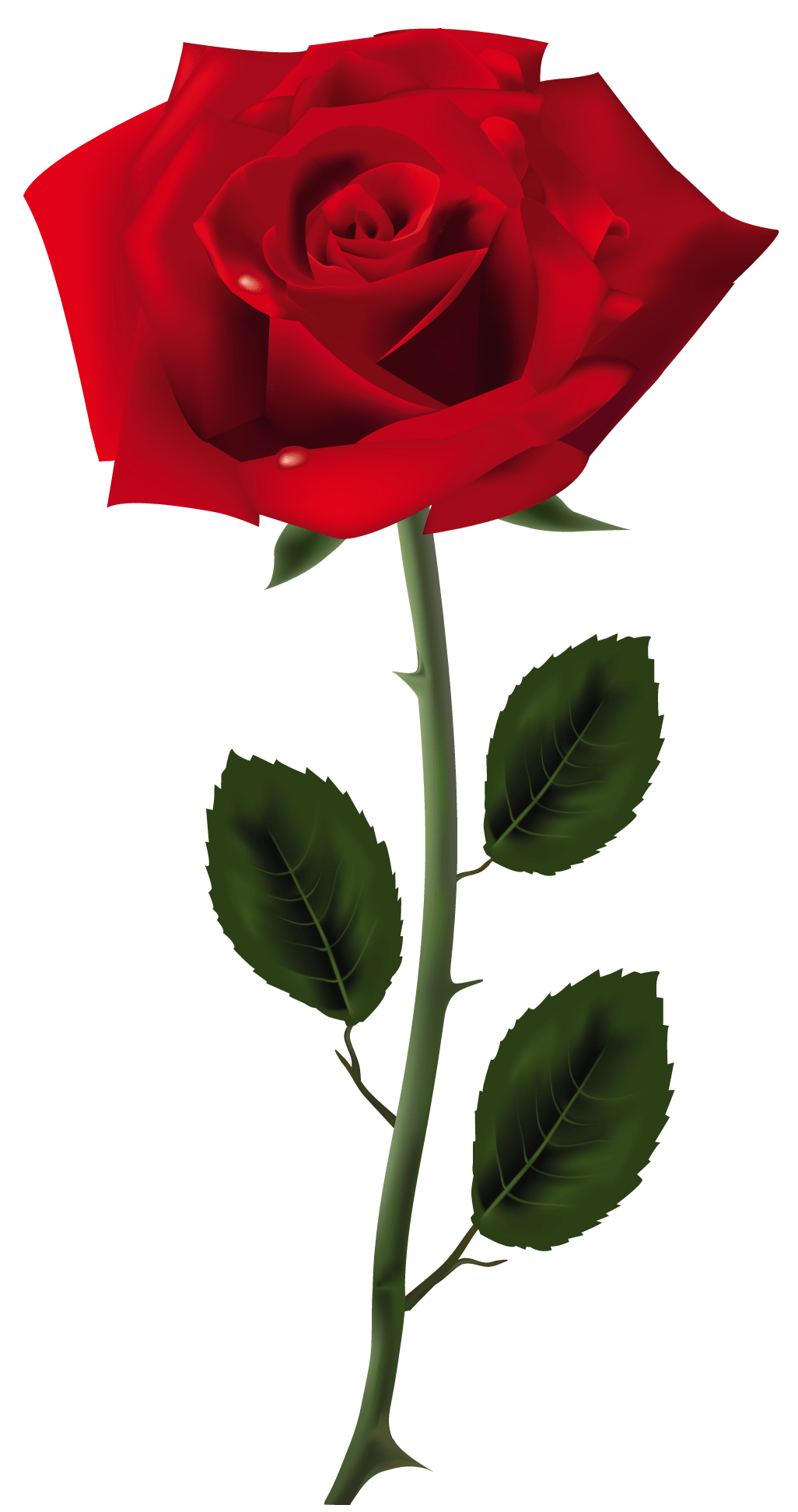 Rose Red Rose Png Art Picture Gallery Yopriceville High Quality