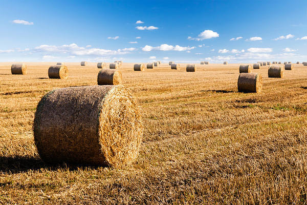 Fall Pumpkin Desktop Wallpaper Free Hay Bales And Sky Background Gallery Yopriceville High