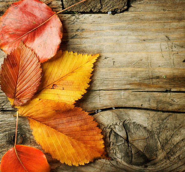 High Resolution Wallpaper Fall Wooden Background With Autumn Leaves Gallery
