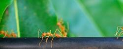 Ants!!!