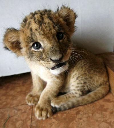 Cute Cubs Wallpaper Segnali Di Vita Intelligente La Realt 224 Non Mi Ha Mai Tradito