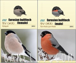 EurasianBullfinchsetgl