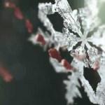 PS EuropeがGamescomに向けたティザー動画を公開-『Until Dawn』新情報か