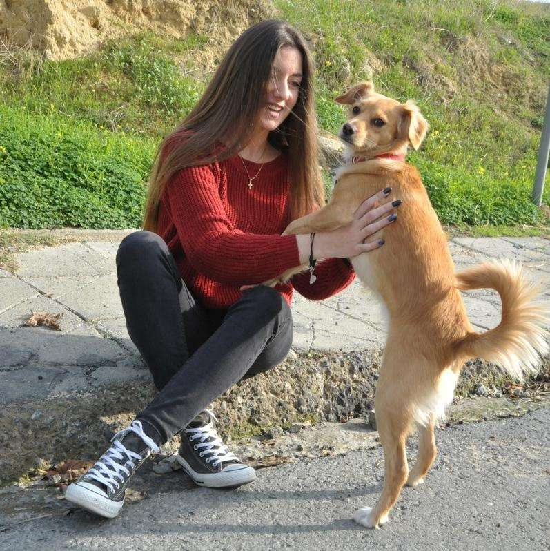 Pet Sitter I have my own car , I love playing with kids and pets - pet babysitter