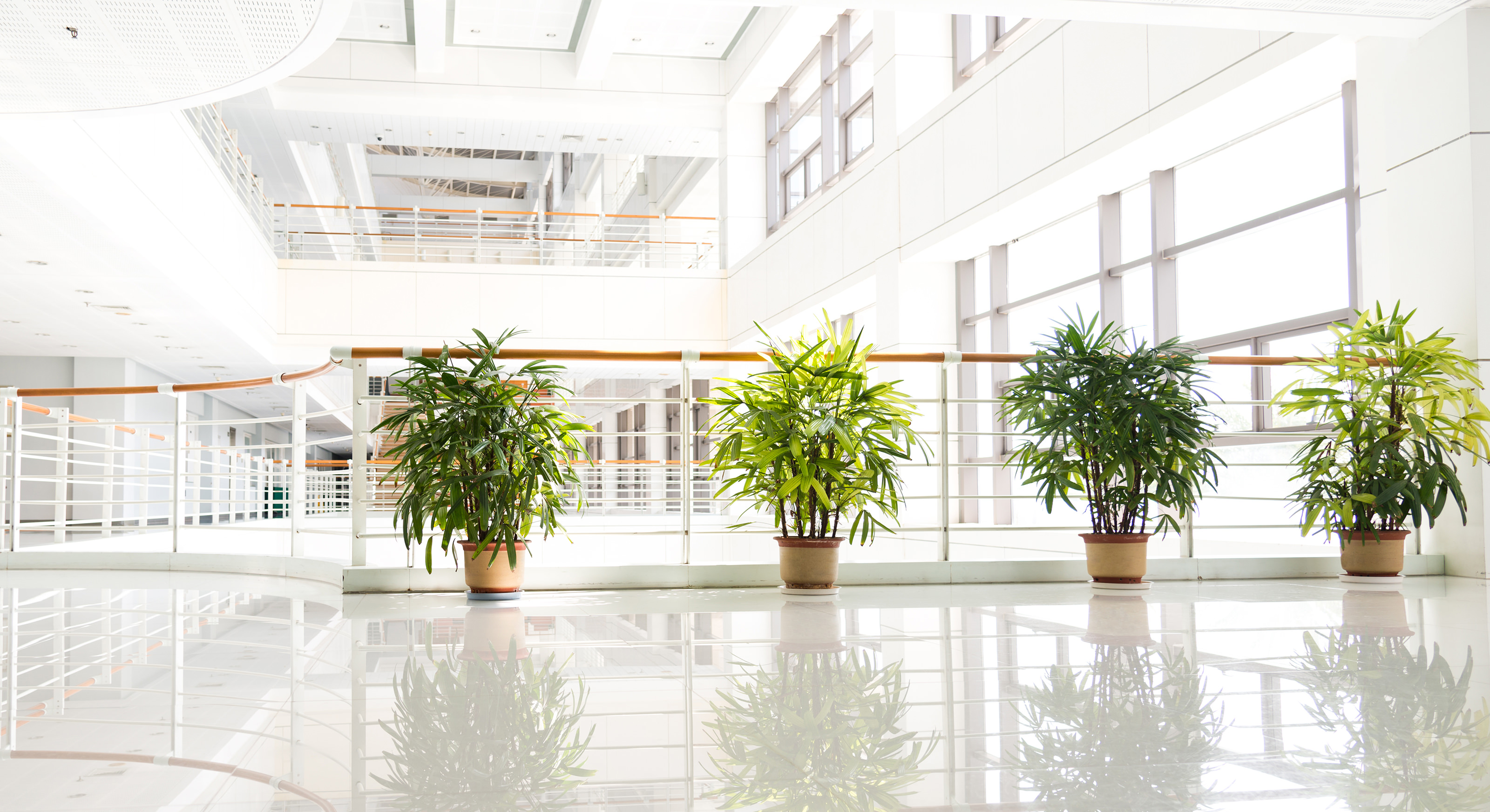Indoor Plants For The Office Indoor Plant Care Facility Management Gardaworld