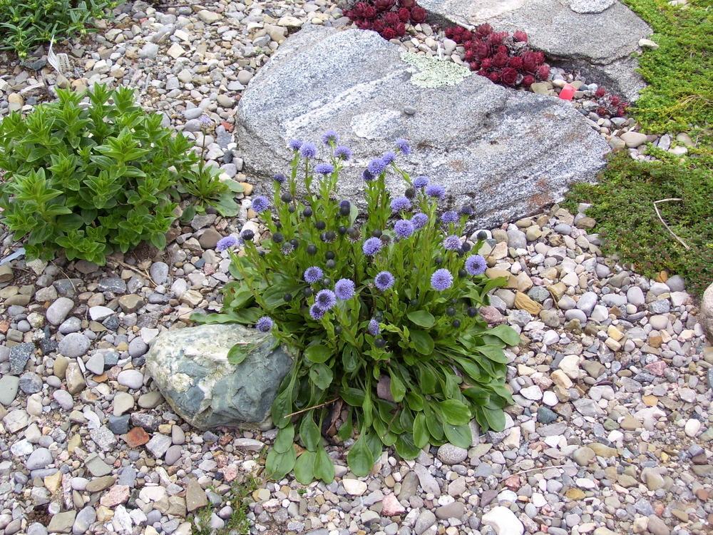 Rock Gardens forum: Self