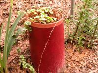Using PVC Pipe for Plant Holders - Garden.org