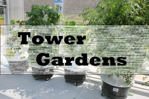 Amazing Tower Gardens