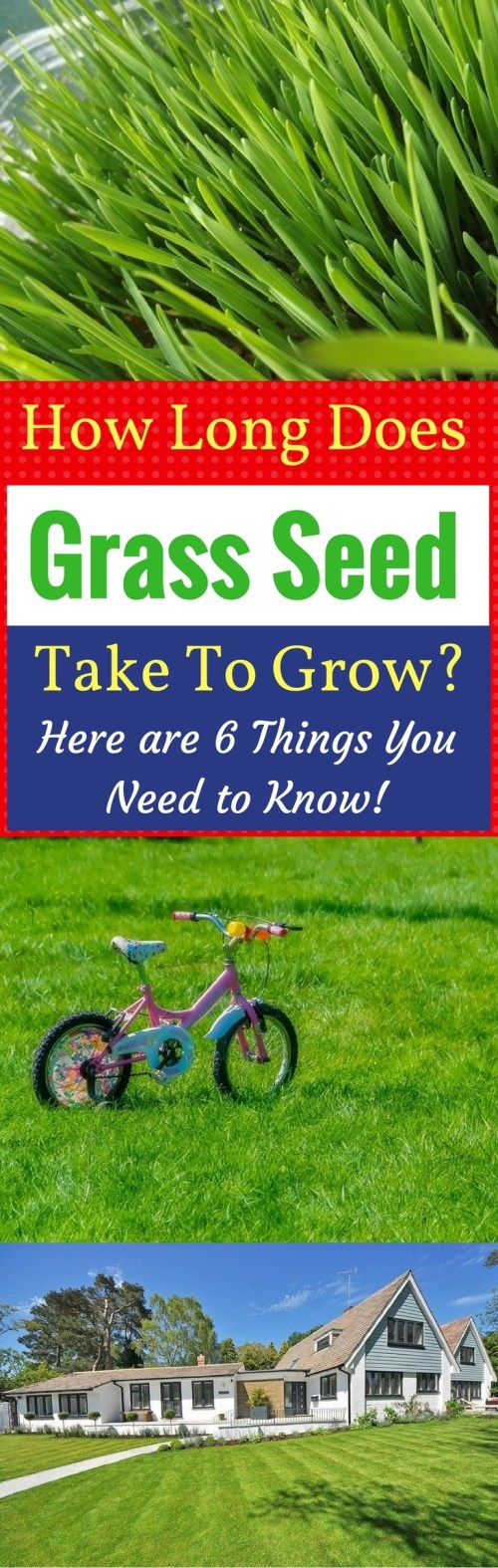 Medium Of Fast Growing Grass Seed