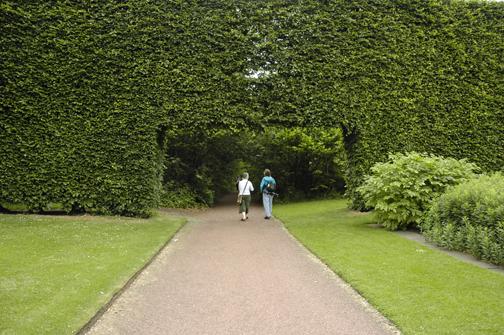 Garden A To Z Big Hedges