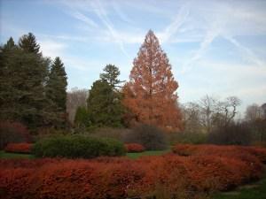 Wallpaper Scenes Of Fall Japanese Maple Ablaze 171 Winterthur Garden Blog