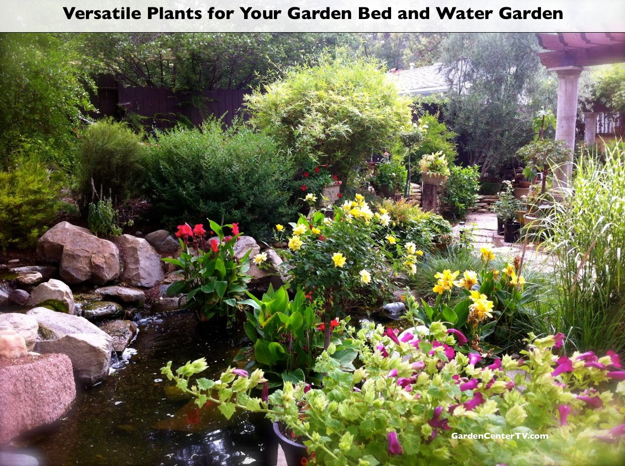Plant Bed Versatile Plants For Your Garden Bed And Water Garden