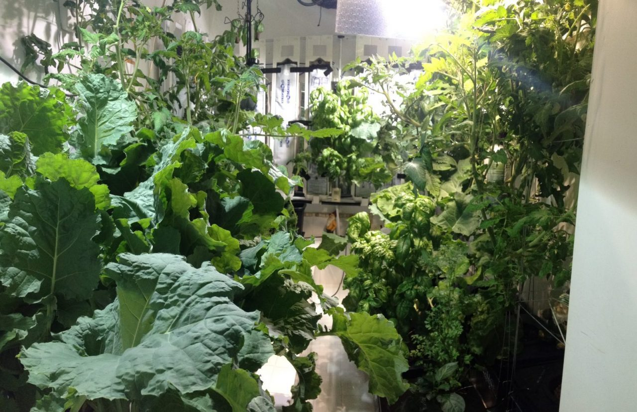 Great Hydroponics Ideas But Garden Culture Magazine Diary Of An Indoor Grower: Hydroponics Garden Evolution