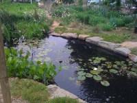 garden ponds | gardenenvironments