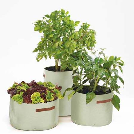 Vegetable Patio Planters Dobies