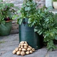 Seed Potatoes - Bargain Patio Growing Kit - Dobies